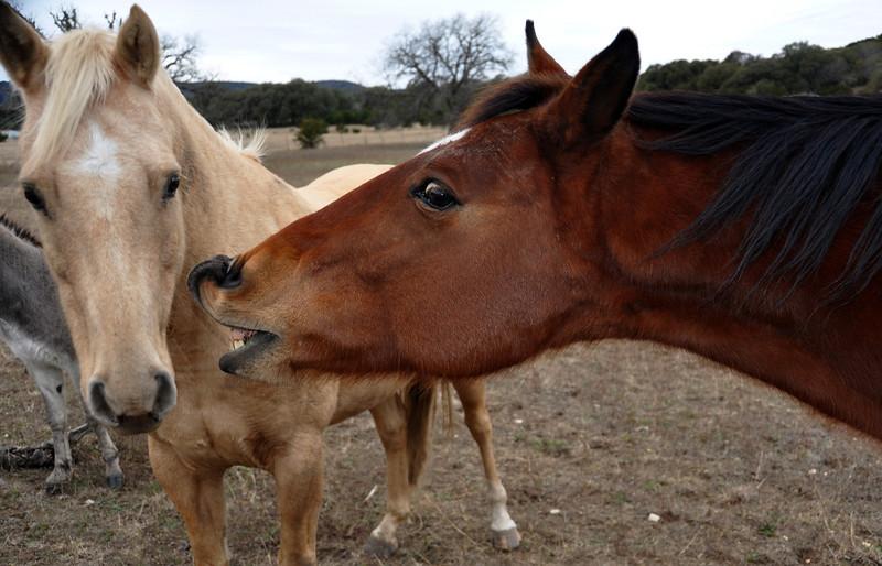 Gossiping Horses