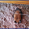 Small bat on wall near entrance  door.