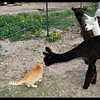 Alpaca meets Cat