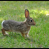 High Altitude Bunny