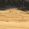Elk herd in the Valle Cauldera (see tiny dots).