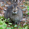 Small Little Rabbit at D&D Camps on Wollaston Lake