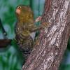 Green fuzzy primate.