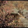 Mule Deer Buck Snoozing on a Warm Rock