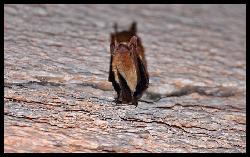 Rightside up Bat, Upside Down Photo