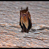 Rightside up Bat, Upside Down Photo