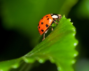 Ladybug on leaf in yard