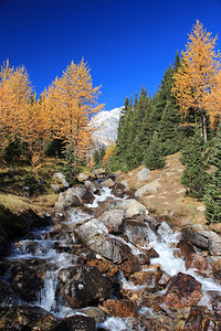 Larch Valley Waterfall