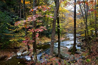 2662 Autumn Trees Creek