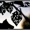 Leaf filigran