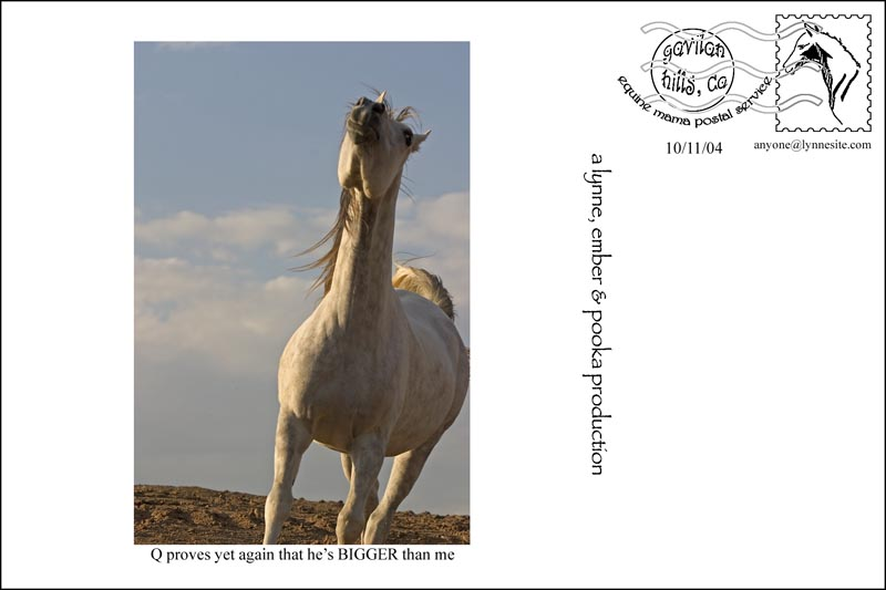 emcard10-11d-4