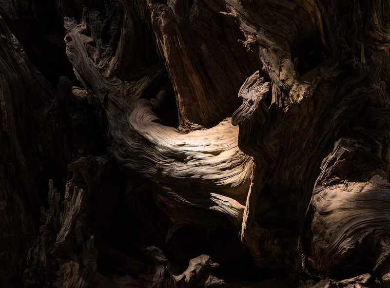 Sequoia Abstract