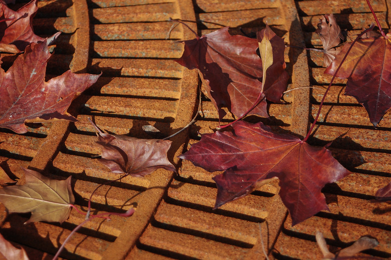 Leaves on Rusted Grating