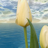 Tulip in Victoria Harbor, Victoria, British Columbia, Canada. This is a composite image, created from three images.