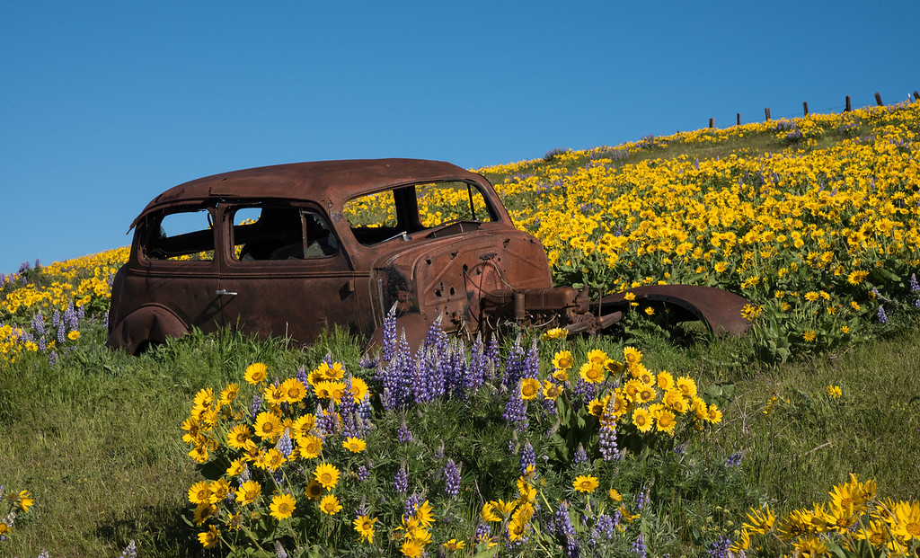 Parked in the Wildflowers