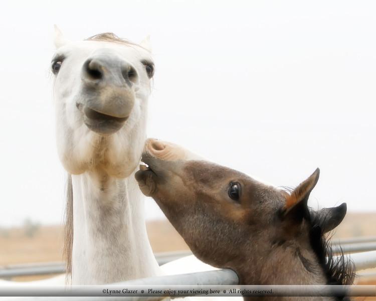 "High key fun, llama-face by Q as they play the ""I'm Bigger"" boy game."