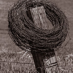 Palouse Barbed Wire