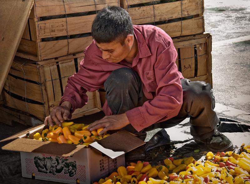 Pepper sorter, Immokalee, Florida farmer's market