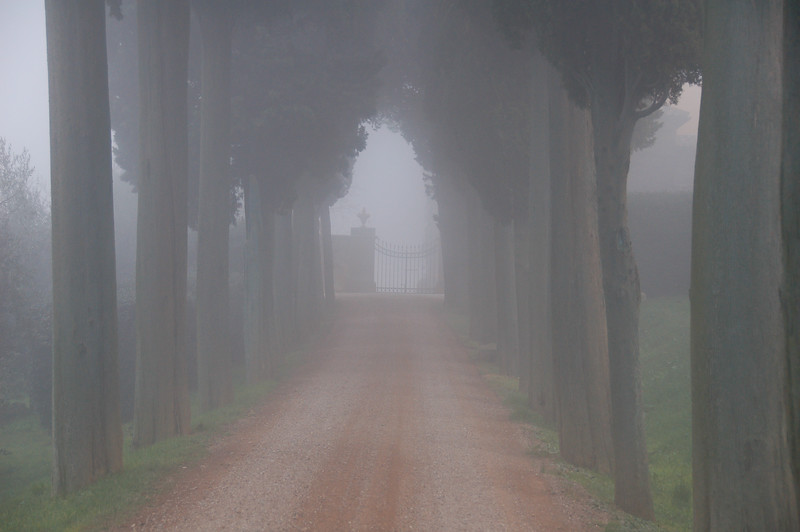 Biondi Santi Gate in Fog