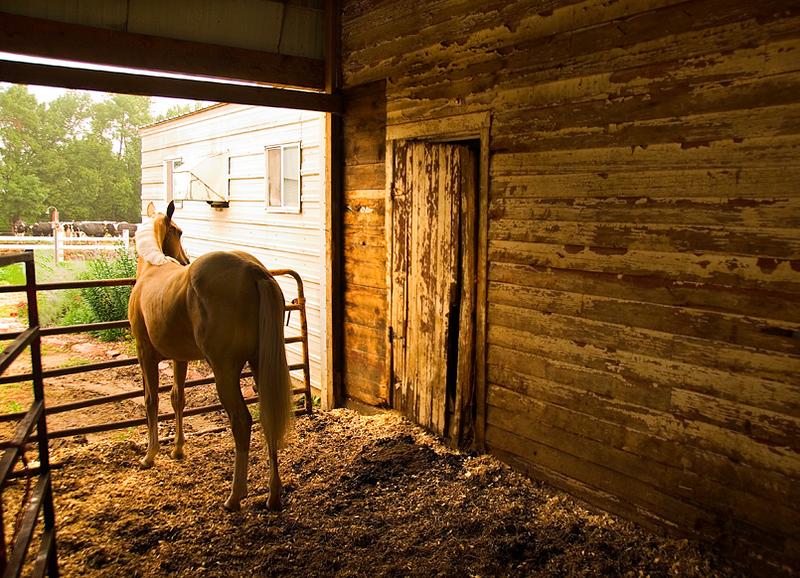 Horse and barn, Pipestone, Minnesota