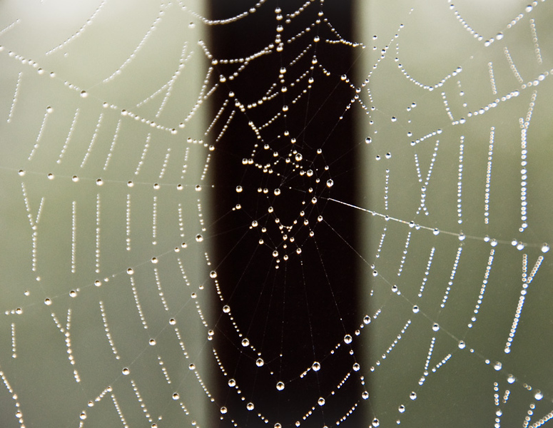 Spider web in the rain, Duluth, Minnesota