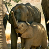Namibia, desert elephants