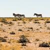 Namibia, zebras, Etosha National Park