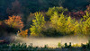 Morning mist by pond in meadow #2