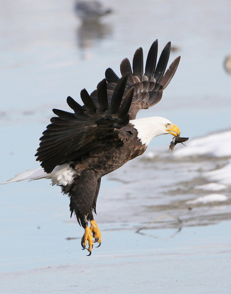 In Flight with fish