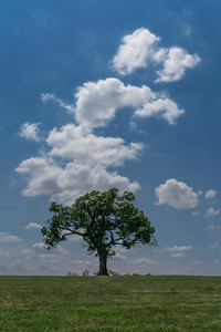 Lone Tree in the Park
