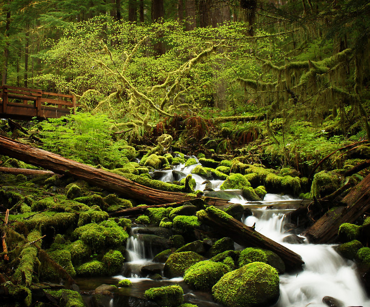 The Hoh Trail crossing a stream in Olympic National Park, Washington.