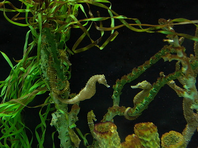 Sea Horse Aquarium