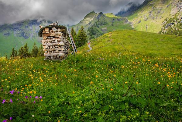 Flower trail in Bernese Oberland, Allmendhubel