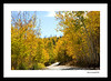 Aspens Road Framed