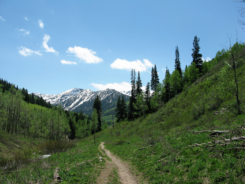 Mill D Trail From Dog Lake
