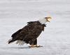 Eagles Beak 1