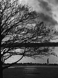 Tree on the sound