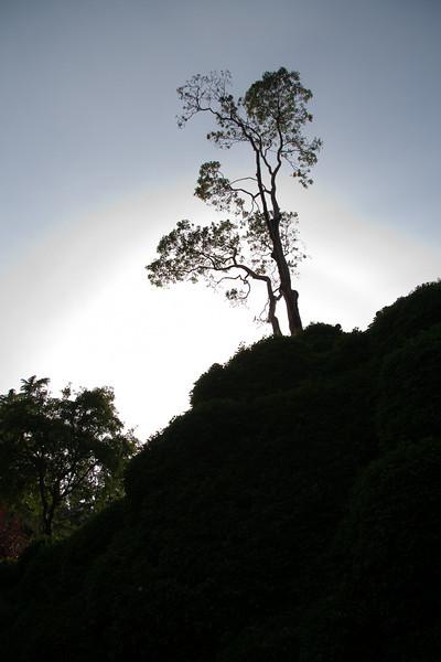 Sunken garden at Butchart Gardens, July 2009
