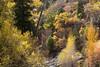 Nebo Loop Trees & Streambed vs 1