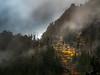 Wenatchee Forest Hillside