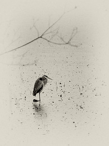 Heron (sepia)