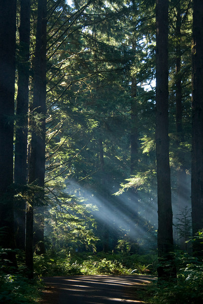 Morning after camping - really pretty with the light shining through the trees. Olympic National Park, Sept. 2008.
