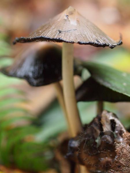 Mushrooms at IslandWood