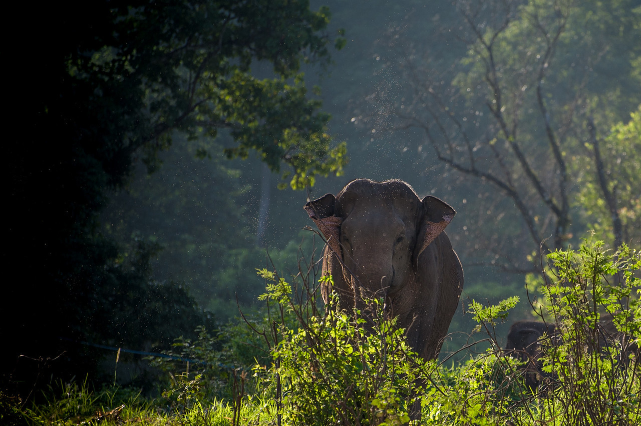 As we rafted by, there were other elephants roaming about the area.