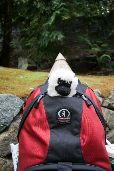 Rally monkey in camera bag with hat. Japanese garden at the Butchart Gardens near Victoria, BC, July 2009