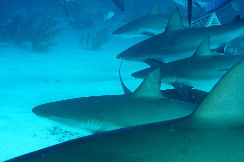 MC Escher Sharks