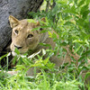 Chobe Chilwero<br /> Botswana, Africa Chobe Chilwero Chobe Chilwero
