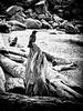 Crow on driftwood