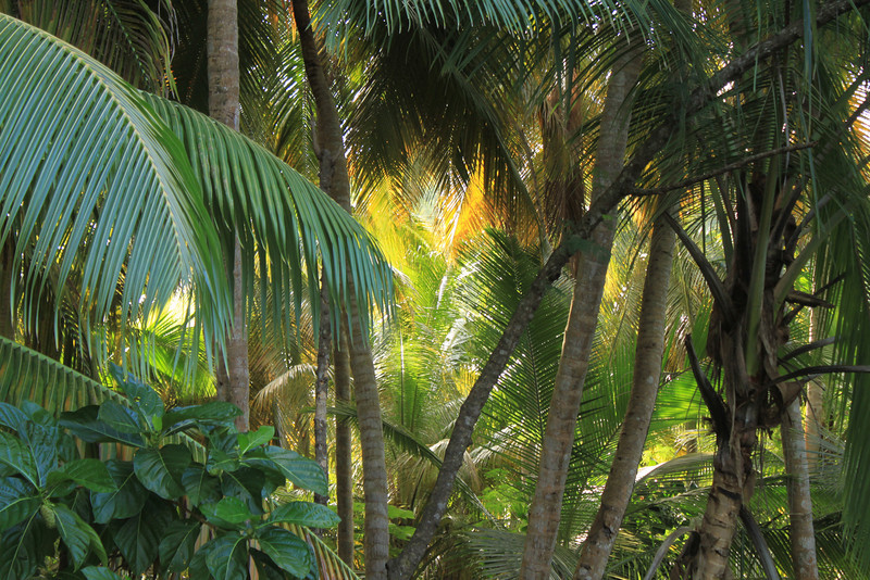 tropical forests of St John