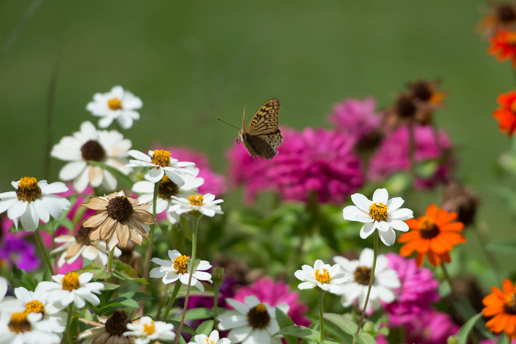 Flying over flowers. September, 2012